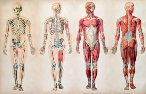 chiropractors help with joint pain