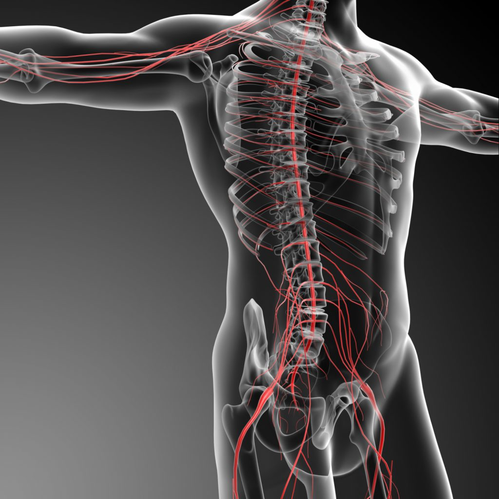 trapped nerves and nerve pain